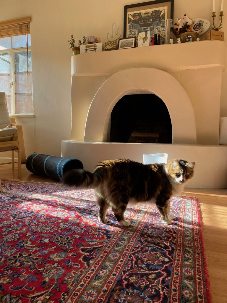 Cat in a sunbeam on a carpet in a house