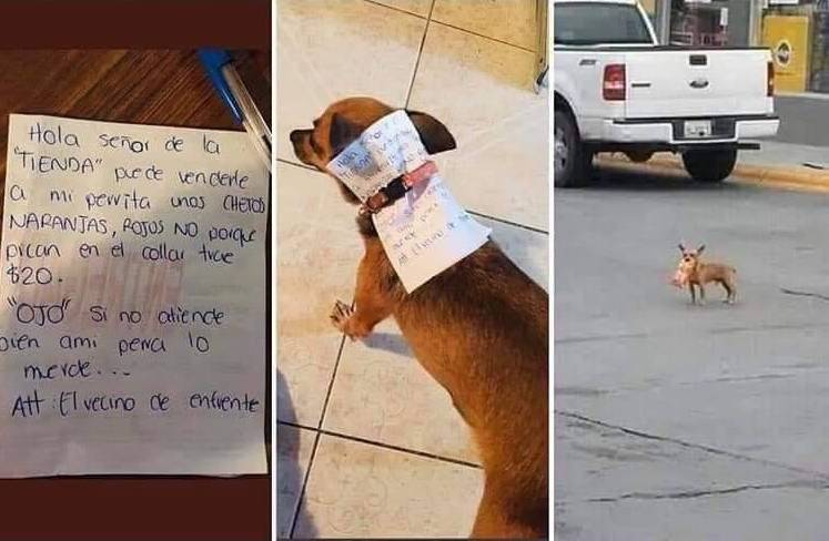 Three panels showing the letter (translated in caption), letter tucked into dog collar, and dog outside with cheetos in mouth