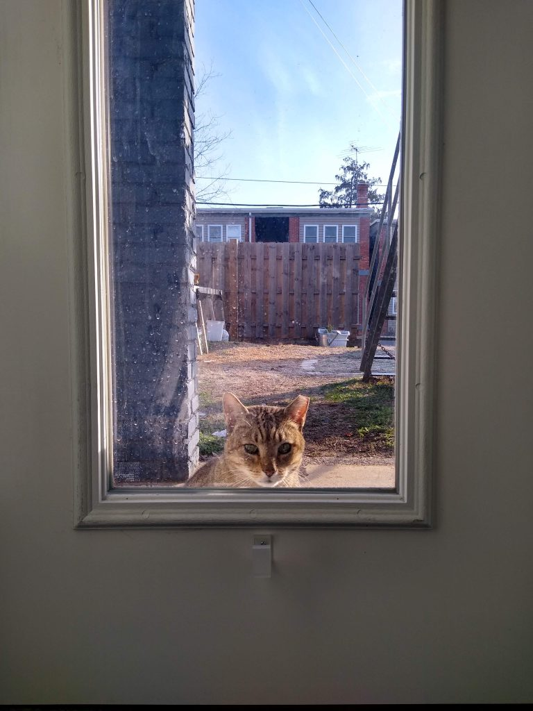 A cat looks through the window